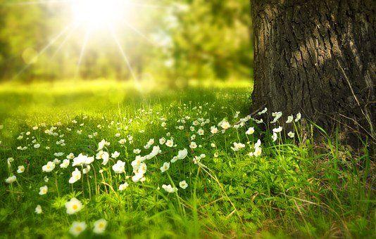 Frühling, wir erwarten Dich !